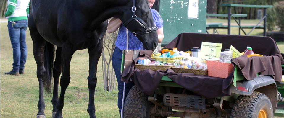 Texas Rose Horse Park Facilities